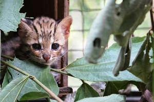 Help Save Victimized Wildlife