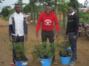 Distribution of tree seedlings at Mambasa Nursery