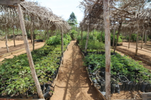 Wamba nursery will be filled with seedlings soon