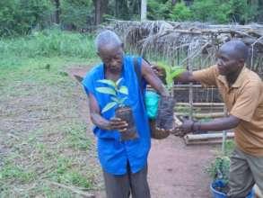 Distributing seedlings from Niania nrusery