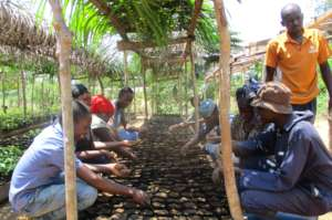 Learning sustainable agroforestry at the nursery.