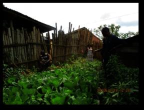Garden in Mambasa