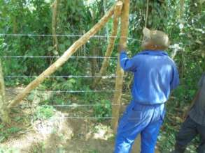 Installing barbed wire to prevent pesky goats