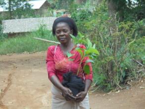 Nurseries provide tree seedlings for distribution