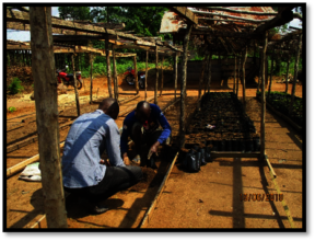 Nursery in Mambasa