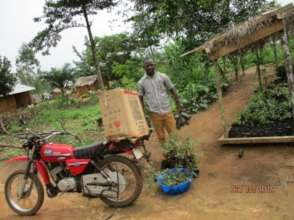 Seedlings distributed to farmers from nursery