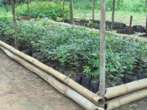 Seedlings thriving at Niania nursery