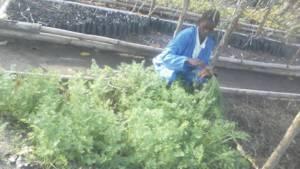 Therese Bangbeto coordinates the Wamba Nursery
