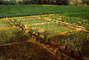 Greening the Sahel!