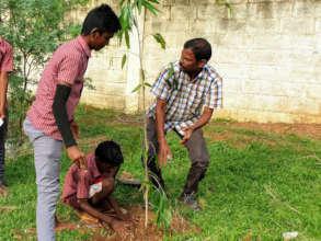Tree planting in school