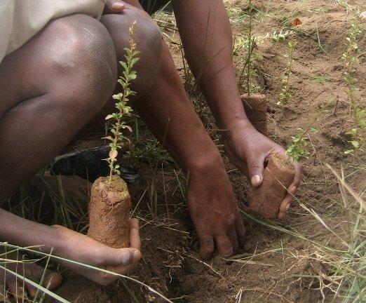 Primary Forest Restoration in Madagascar
