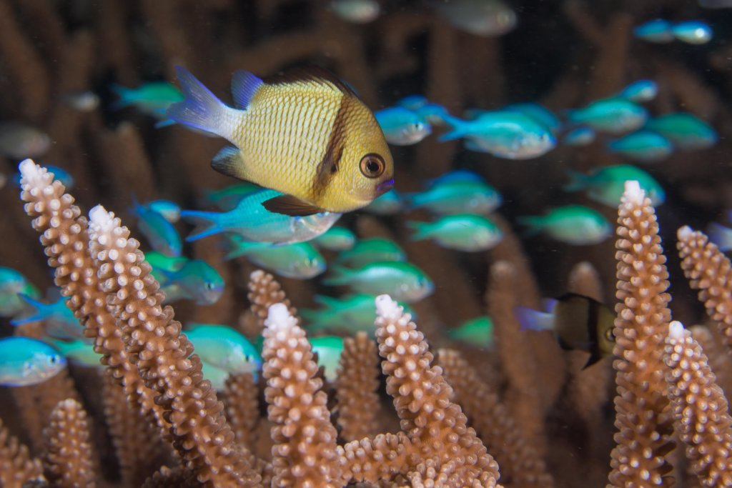 Saving the World's Coral Reefs