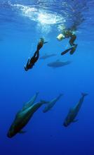Jeff filming Hayden with pilot whales