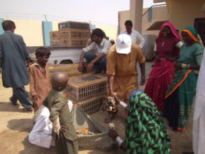 Poultry Birds distribution