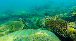 Protecting Marine Ecosystems in the Gulf of Mexico