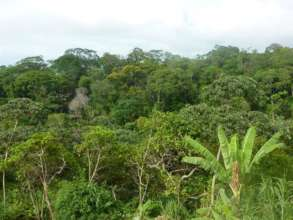 View from our classroom- into the jungle beyond!