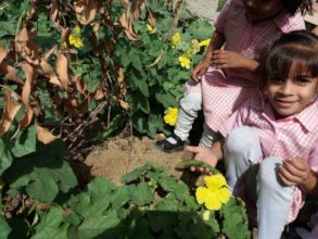 Student's discovering fresh produce in the garden