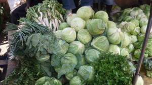 Cabbage ready for sale!