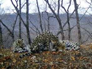 (c) Land of the Leopard NP