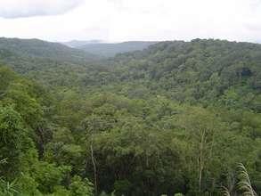 Mondulkiri project area, forest viewing