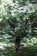 ICCN Ranger patrolling forest