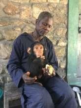 Mokonzi with female chimp infant