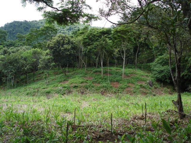 Protect Rainforest With Sustainable Practices