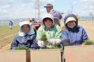 Women volunteering at OISCA's project in Miyagi