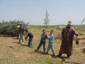 Youth helping with olive trees