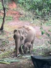 Newborn Staying Close to Mum