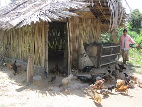 Sophat's chicken and duck raising activities