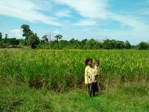 Rice field in the village