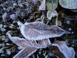 Frost seen on leaves