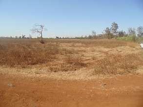 HODI Peace Field