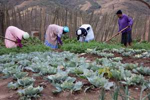 Growing vegetables to feed our families