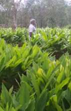 EBBY T OUR GINGER FARMER AT GUDALUR