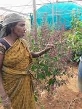 Kamala our seed-saver