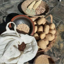Traditional seeds saved by small farmers