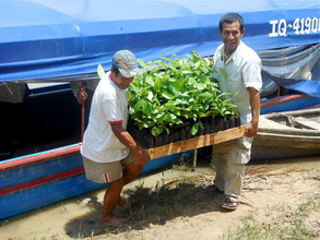 Seedlings arriving to be planted