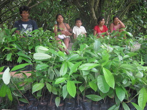 Discussing the tree planting campaign