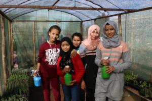 Nursing the seedlings in the greenhouse