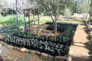 The students' aromatic and medicinal plants