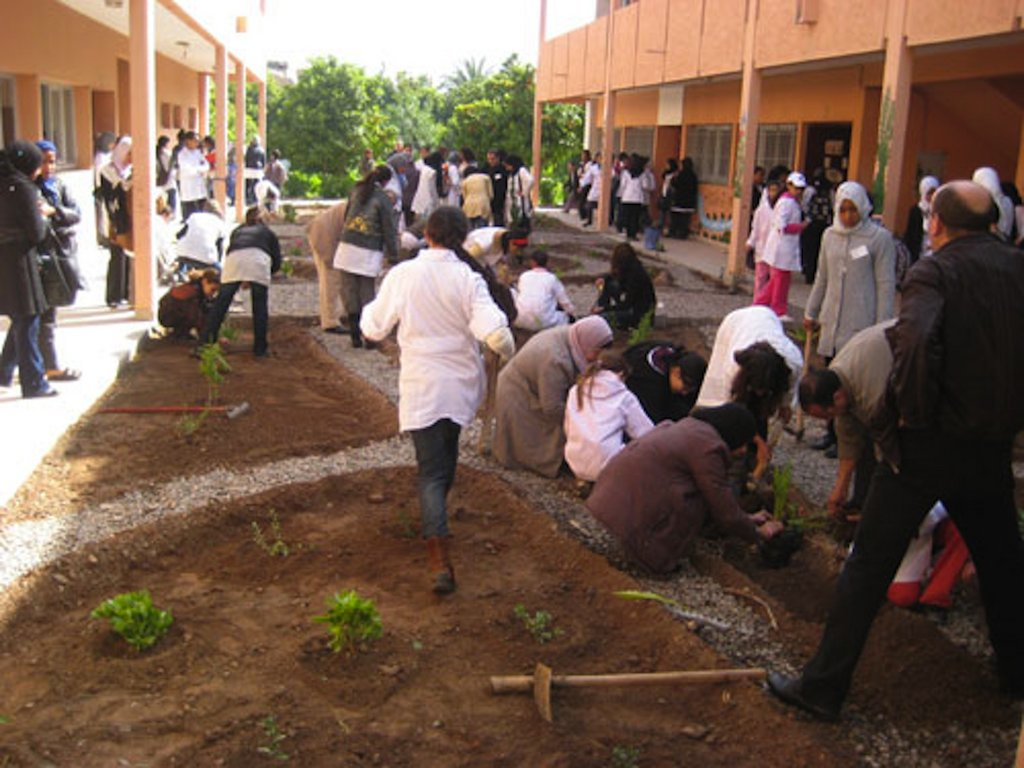 Benefit 700 Moroccan girls through school gardens
