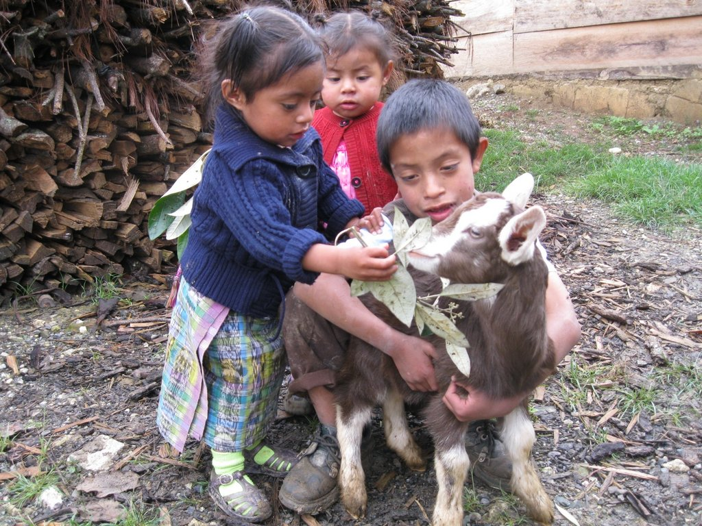 Buy a Goat for a Family in Guatemala