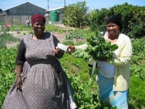 Urban Farming and Gardening Continued