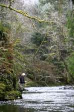 Nehalem River Photo