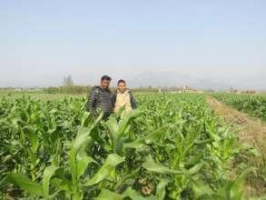 Maize farming on rented land in Lamahi
