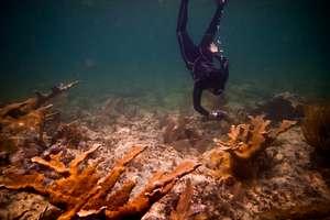 Gaby Nava below the waves