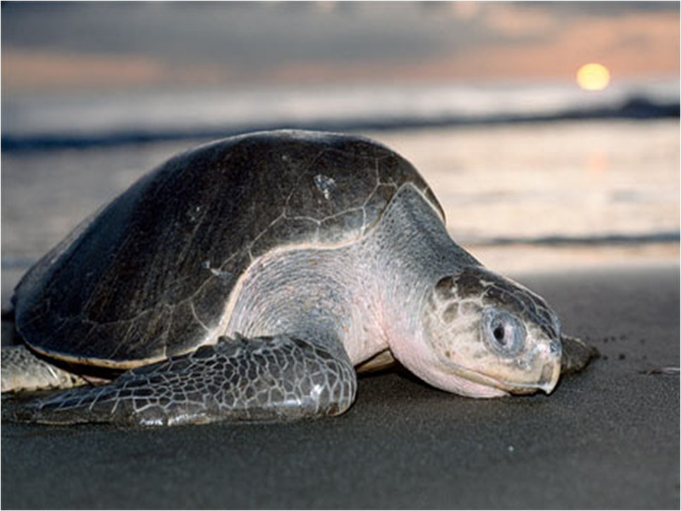 Sea Turtle Conservation & Environmental Education