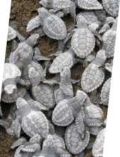 sea turtles nests emerging from the sand
